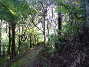 Wairakau Stream Track