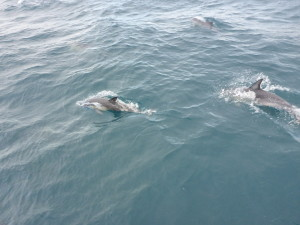 Look! Dolphins!